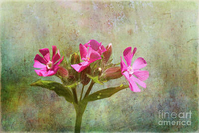 Digital Art - Red Campion by Liz Alderdice
