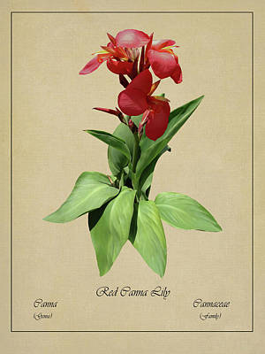 Digital Art - Red Canna Lily Botanical by IM Spadecaller