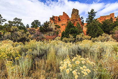 Photograph - Red Canyon Area Utah by Ben Graham