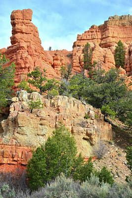 Photograph - Red Canyon Roadside by Ray Mathis