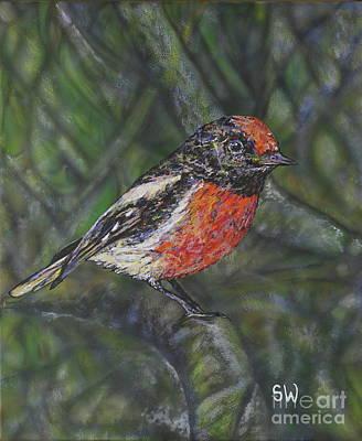 Red-capped Robin Original