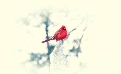 Photograph - Red Cardinal On Angel Wing by Charline Xia