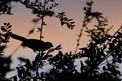 Photograph - Red Cardinal At Dusk 2 by Warren Thompson