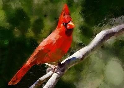 Digital Art - Red Cardinal On A Branch by Charmaine Zoe