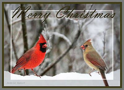 Photograph - Red Cardinal Pair - Merry Christmas Card by Sandra Huston
