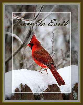 Photograph - Red Cardinal - Peace On Earth Holiday Card by Sandra Huston