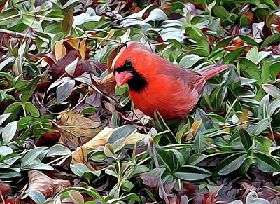 Digital Art - red cardinal ...1659 nature bird Hd image by S Art