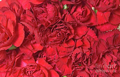 Photograph - Red Carnations by Liz Masoner
