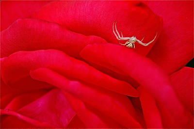 Red Carpet Art Print by Mark Lemon