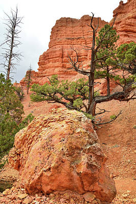 Photograph - Red Castle Boulder by Ray Mathis