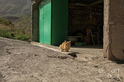 Photograph - Red Cat And Green Shed by Patricia Hofmeester