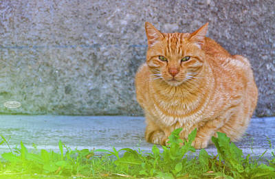 Photograph - Red Cat Relaxation by Elenarts - Elena Duvernay photo