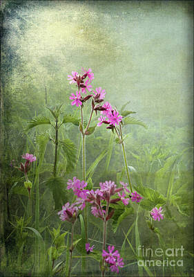 Photograph - Red Catchfly Or Campion by Liz Alderdice