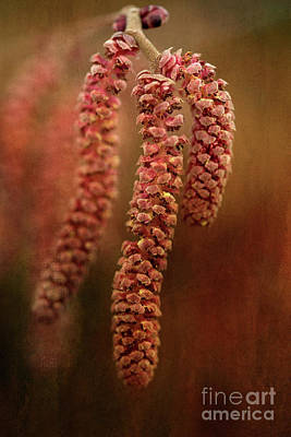 Digital Art - Red Catkins by Liz Alderdice