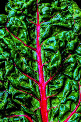 Photograph - Red Chard by Garry Gay