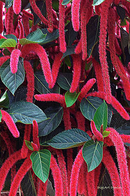 Fuzzy Digital Art - Red Chenille by DigiArt Diaries by Vicky B Fuller