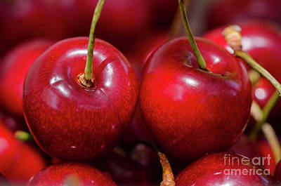 Photograph - Red Cherries by Perry Van Munster
