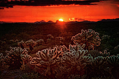 Photograph - Red Cholla Sunset  by Saija Lehtonen