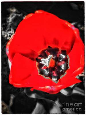 Photograph - Red  by Christine Paris