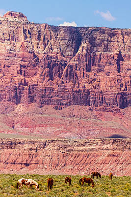 Photograph - Red Cliff Horses by James BO Insogna