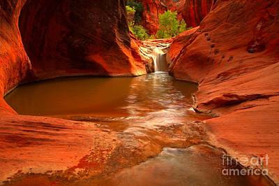 Photograph - Red Cliffs Oasis by Adam Jewell