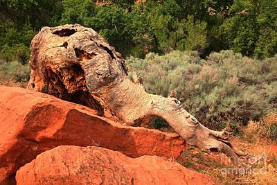 Photograph - Red Cliffs Wooly Mammoth by Adam Jewell