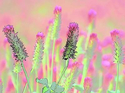 Photograph - Red Clover Detail by Jerry Sodorff