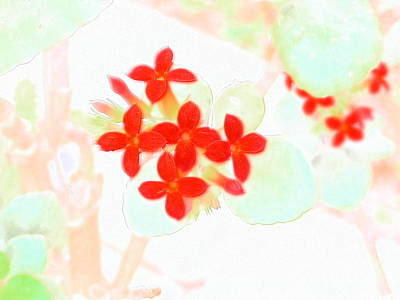 Photograph - Red Cluster Of Kalachoe by Belinda Lee