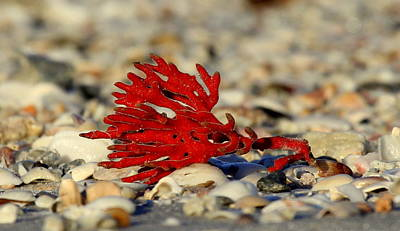 Photograph - Red Coral by Sean Allen