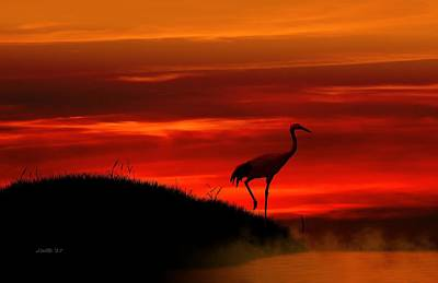 Digital Art - Red Crowned Crane At Dusk by John Wills