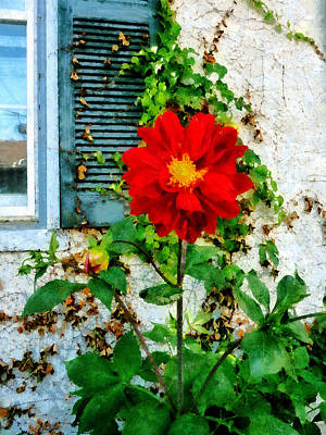 Photograph - Red Dahlia By Window by Susan Savad
