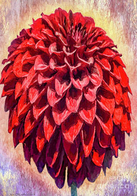 Photograph - Red Dahlia by Jean OKeeffe Macro Abundance Art