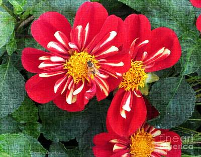 Photograph - Red Dahlia by Kathie Chicoine