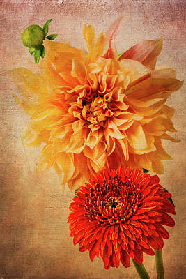 Photograph - Red Daisy And Yellow Dahlia by Garry Gay