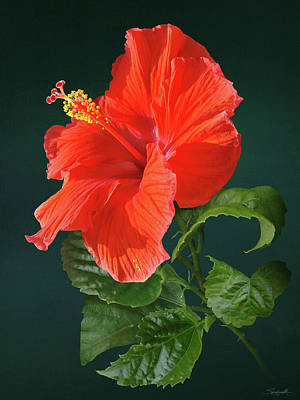 Digital Art - Red Darling Hibiscus by Spadecaller