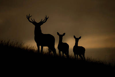 Photograph - Red Deer At Dawn by Andy Beattie Photography