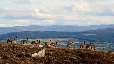 Photograph - Red Deer  by Gavin MacRae