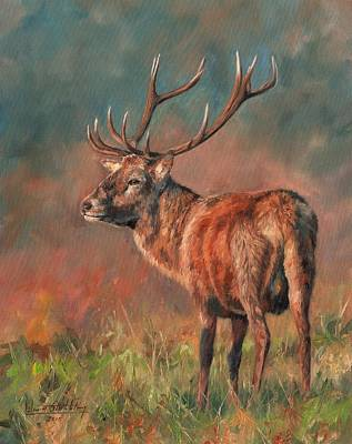 Red Deer Stag Original by David Stribbling