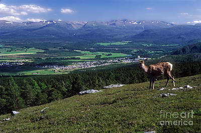 Photograph - Aviemore And The Cairngorms Panorama by Phil Banks