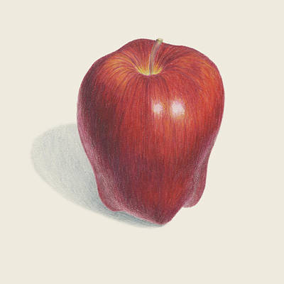 Local Food Drawing - Red Delicious Apple  by Carlee Lingerfelt