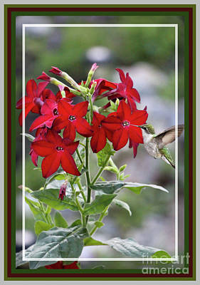 Photograph - Red Delight, Framed by Sandra Huston