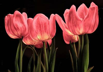 Photograph - Red Tulipes by Dennis Dugan
