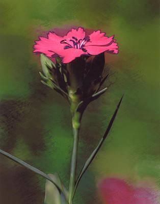 Red Dianthus Art Print by Joe Halinar