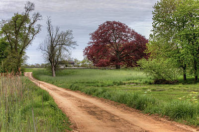 Photograph - Red Dirt Road And Maple by Steve Gravano
