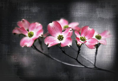 Photograph - Red Dogwood On Textured Background by Carolyn Derstine