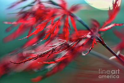 Photograph - Red Dragon Flies by Jean OKeeffe Macro Abundance Art