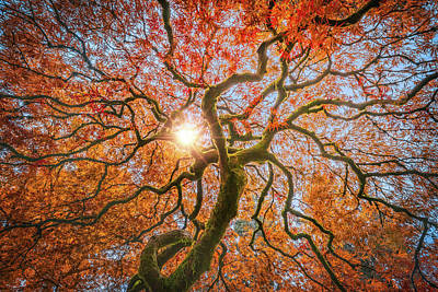 Photograph - Red Dragon Japanese Maple In Autumn Colors by William Lee
