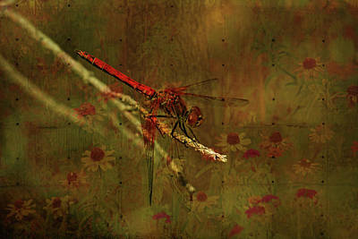 Red Dragonfly Dining Art Print by Bonnie Bruno