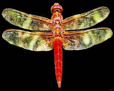 Photograph - Red Dragonfly by Tony Grider