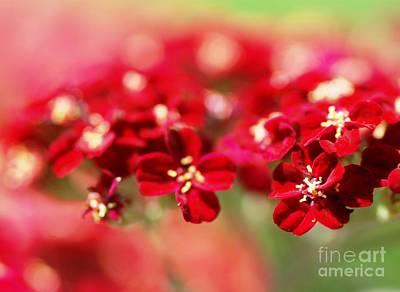 Red Dreams Original by Catherine Lau